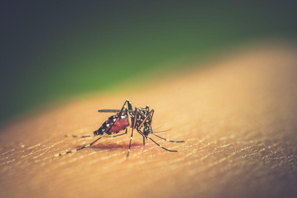 Dengue em crianças - Tudo o que precisa saber 1